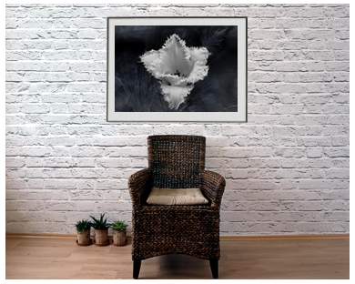 ArtAperture.net - Dar Wolfe - Visual Therapy - Floral - Showcase of floral beauty achieved through a selective fusion of reality and art