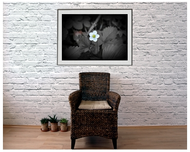 ArtAperture.net - Dar Wolfe - White Pendulum - Floral - Showcase of floral beauty achieved through a selective fusion of reality and art
