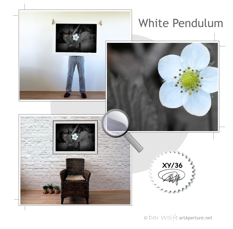 ArtAperture.net - Dar Wolfe - White Pendulum - Floral - Showcase of floral beauty achieved through a selective fusion of reality and art.