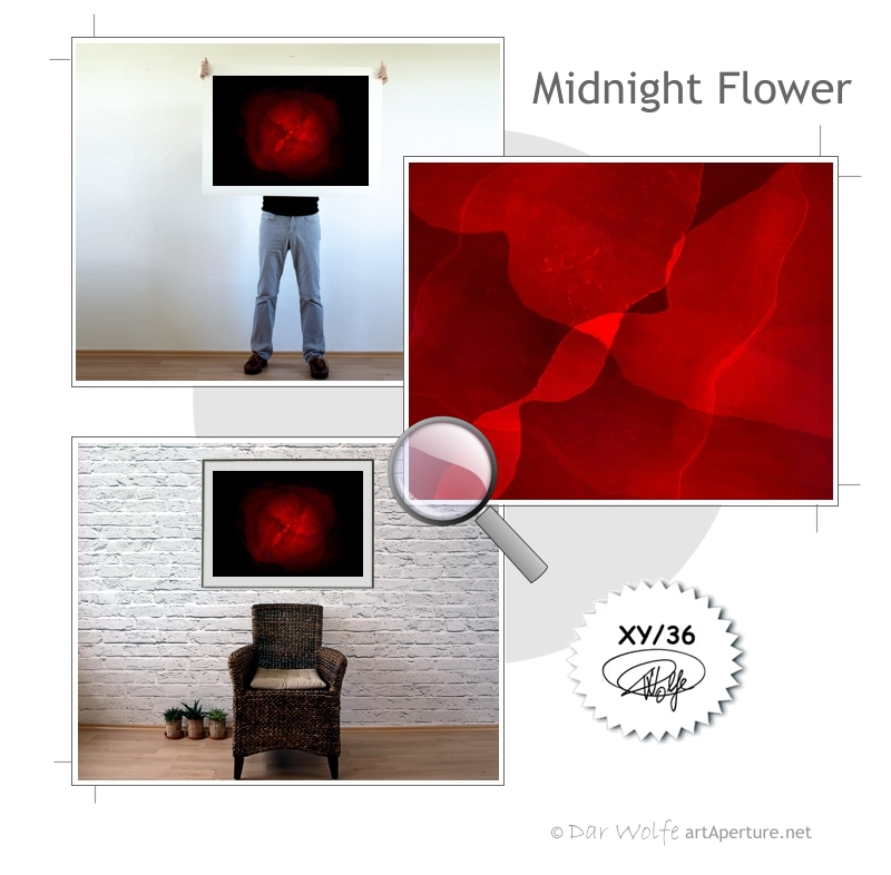 ArtAperture.net - Dar Wolfe - Midnight Flower - Floral - Showcase of floral beauty achieved through a selective fusion of reality and art.