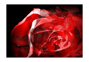 ArtAperture.net - Dar Wolfe - Storm - Floral - Showcase of floral beauty achieved through a selective fusion of reality and art